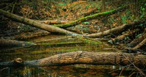 An-image-of-broken-trees-fall-in-water